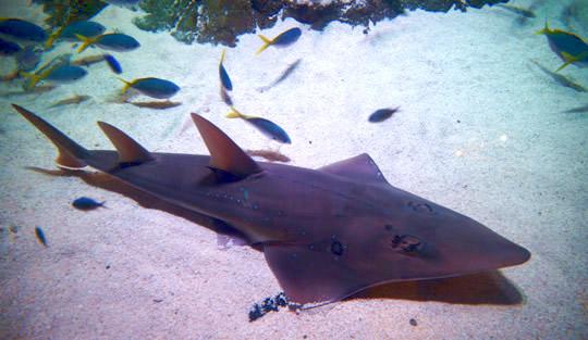 Shark Mathematics Three