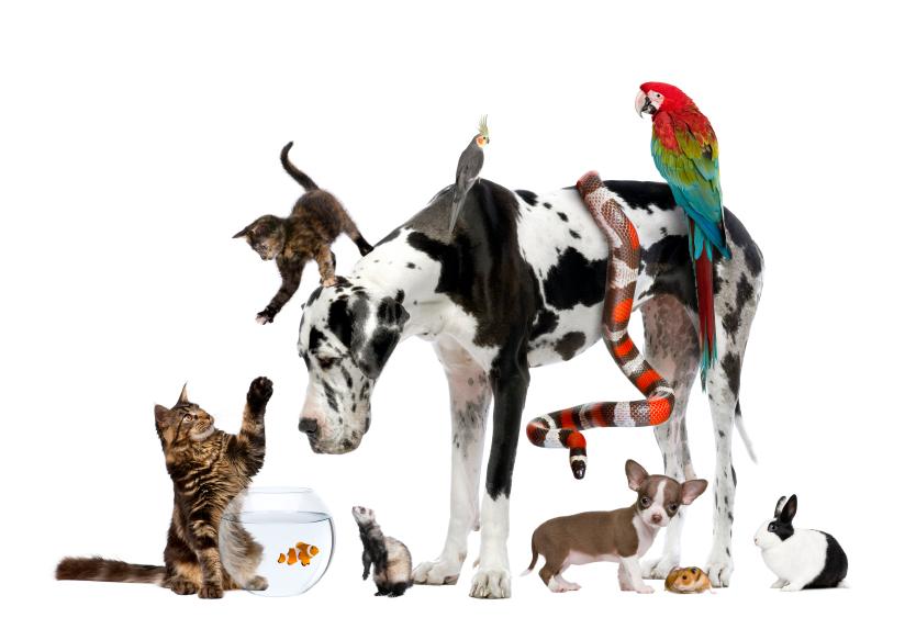 istockphoto pets
